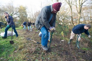 Planting a fruiting hedge at Sandy Brow December 2014. Photo Jon Stokes