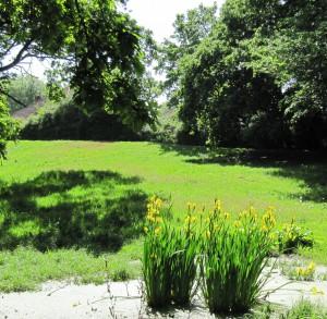 Privett Road Irises Adele