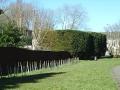 penjar-hedge-170213-2