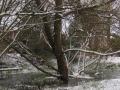 penjar-snow-adele