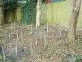 penjar-trees-050313